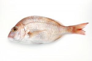 鯛の効能とおすすめレシピ