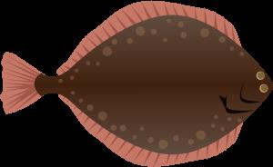 まこがれい(真子鰈)の栄養成分表