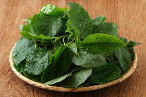 モロヘイヤの栄養素とレシピ、食品成分表