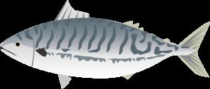 鯖の加工品(開き干し、塩鯖、しめ鯖)の栄養成分表