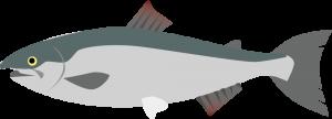 キングサーモン(鱒の介)の栄養成分表