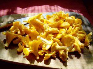 タモギ茸の効能とおすすめレシピ