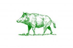 猪肉(イノシシ)の効能とおすすめレシピ、食品成分表