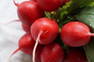 ラディッシュ(二十日大根)の効能とおすすめレシピ