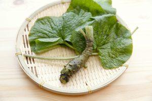 わさび(山葵)の効能とおすすめレシピ