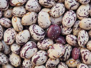 うずら豆の効能とおすすめレシピ、食品成分表