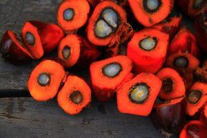 パーム油の効能とおすすめレシピ、食品成分表