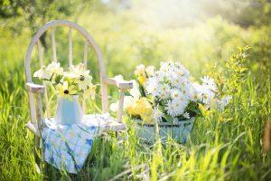 日向夏の効能とおすすめレシピ、食品成分表