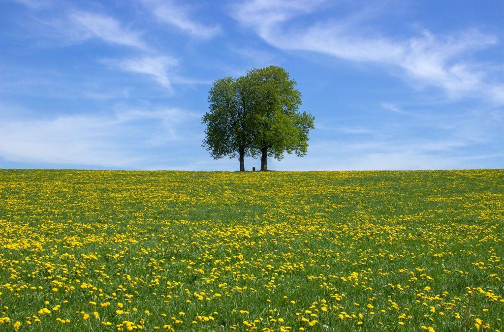 空と緑と木と大地