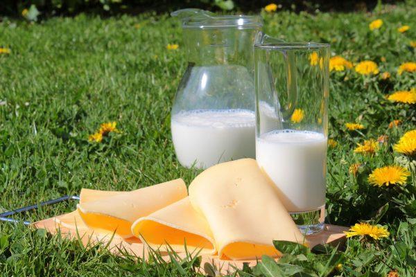 牛乳とチーズでカルシウム摂取