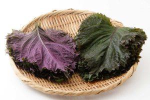シソ(紫蘇)の効能とおすすめレシピ、食品成分表