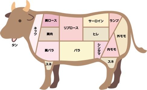 牛肉の部位の説明イラスト