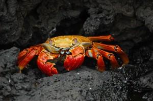 蟹の効能とおすすめレシピ