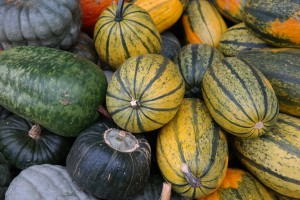 そうめんかぼちゃ(キンシウリ、金糸瓜)の栄養成分表