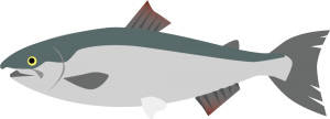 塩鮭の栄養成分表