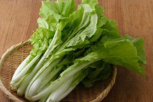 山東菜(さんとうさい)の効能とおすすめレシピ、食品成分表