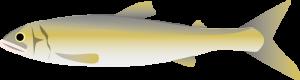 鮎の内臓(天然/養殖)の栄養成分表