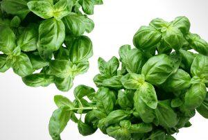 バジルの効能とおすすめレシピ、食品成分表
