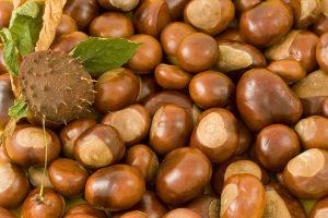 栃の実の効能とおすすめレシピ、食品成分表