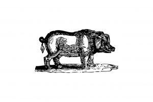 猪豚肉(いのぶた)の効能とおすすめレシピ、食品成分表