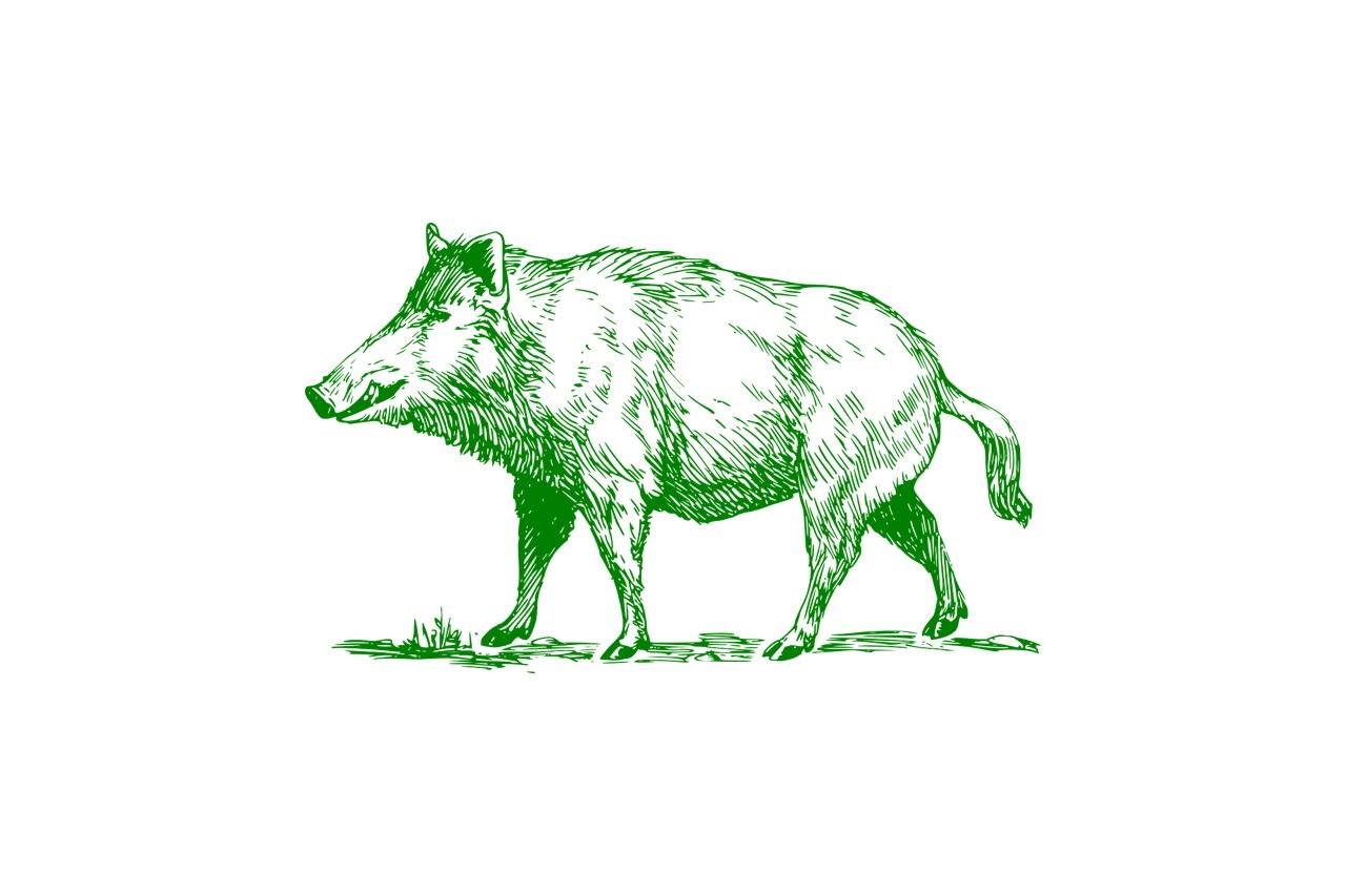 猪肉(イノシシ)の栄養とおすすめレシピ、食品成分表