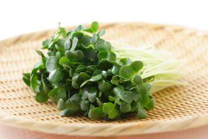 かいわれ大根の効能とおすすめレシピ、食品成分表