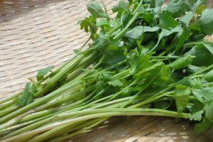 キンサイ(芹菜)の効能とおすすめレシピ、食品成分表