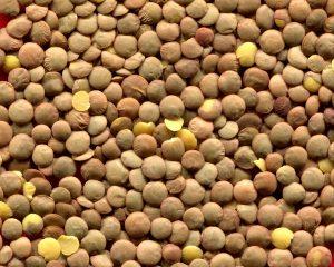レンズ豆の効能とおすすめレシピ、食品成分表