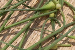 ニンニクの芽(茎にんにく)の効能とおすすめレシピ、食品成分表