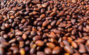 松の実の効能とおすすめレシピ、食品成分表