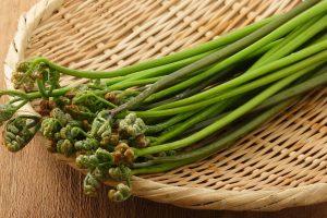 わらび(蕨)の効能とおすすめレシピ、食品成分表