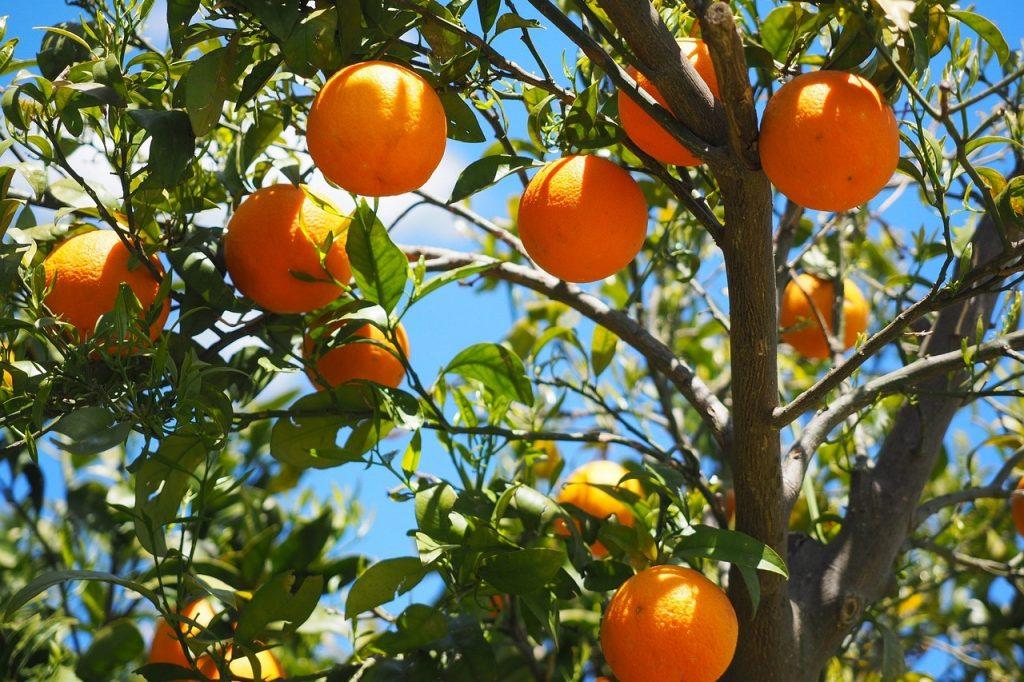 オレンジはちみつの特徴と効能、おすすめオレンジはちみつ5種