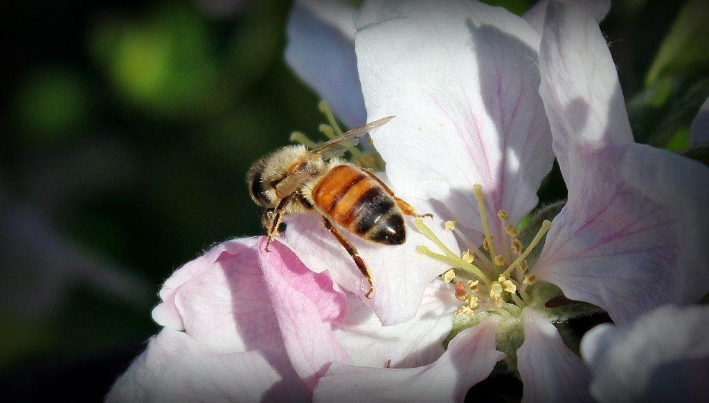 りんごはちみつの特徴と効能、おすすめりんごはちみつ5種
