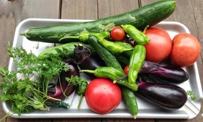 北海道の家庭菜園野菜