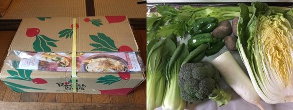 らでぃっしゅぼーやの野菜パレット