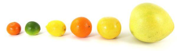 様々な大きさの柑橘類