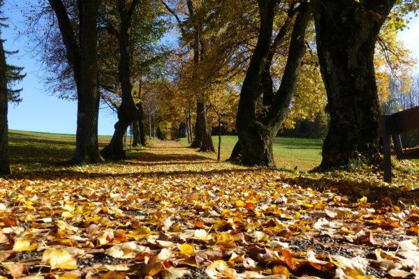 秋の晴れた日