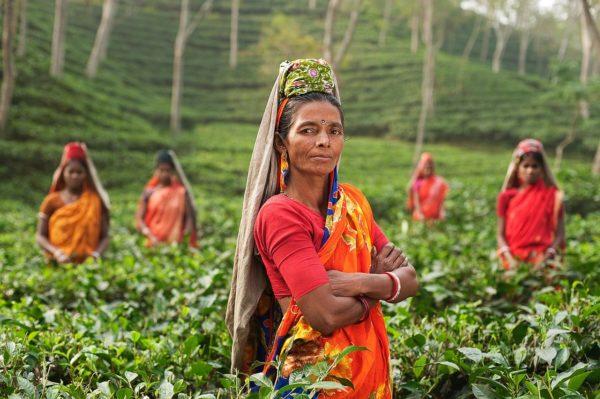 インド お茶