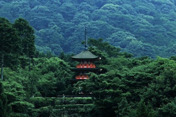 森の中のお寺