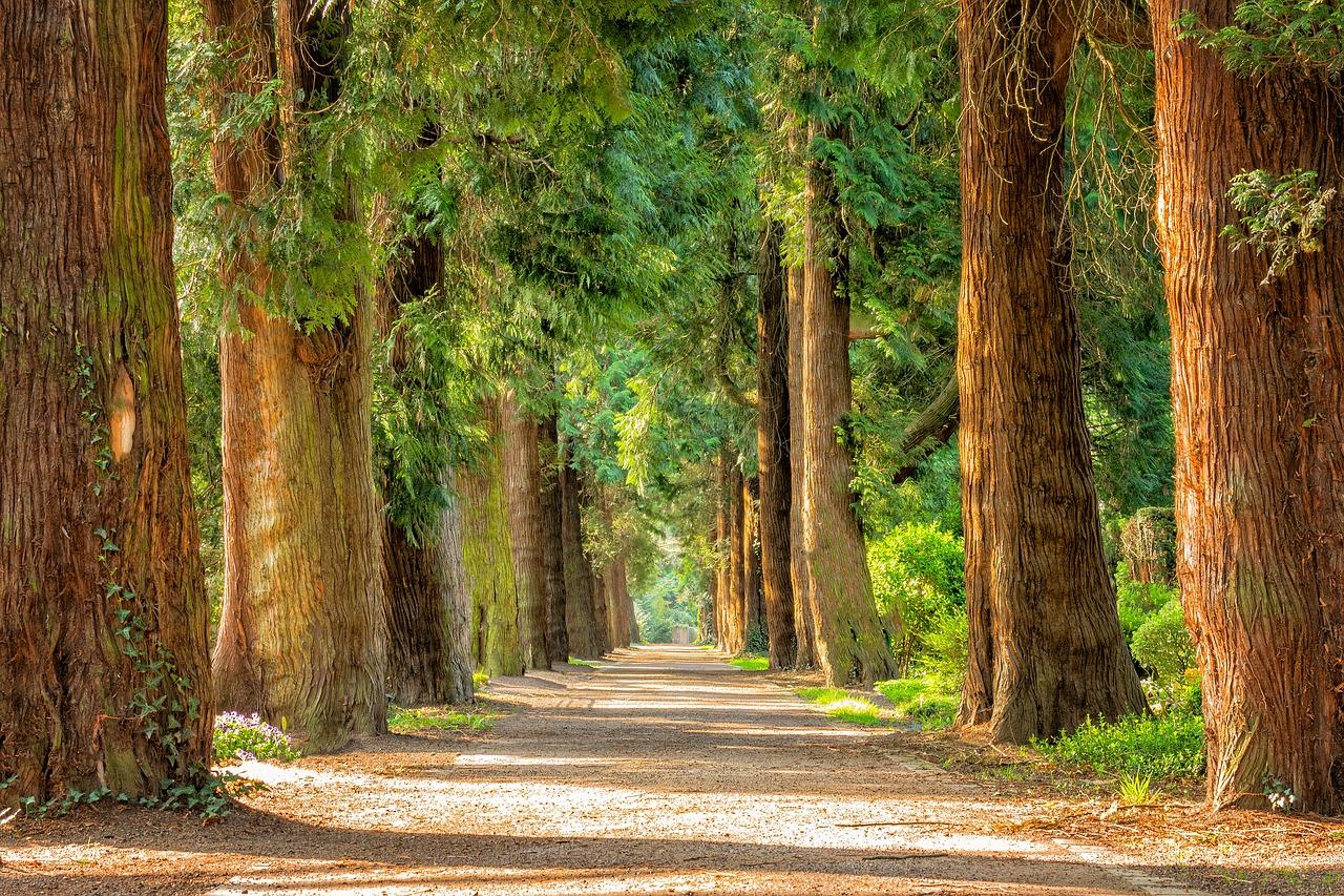 緑の森林の木