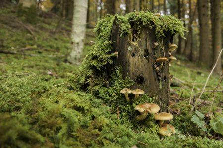 サルノコシカケとキノコと森