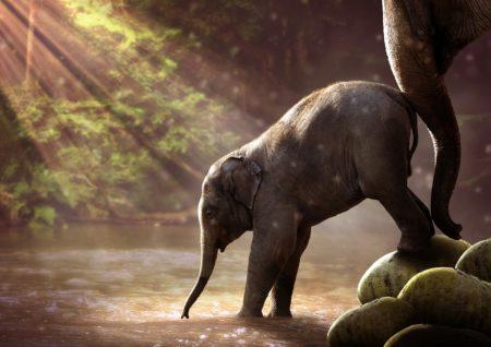 水を飲む子どもの象